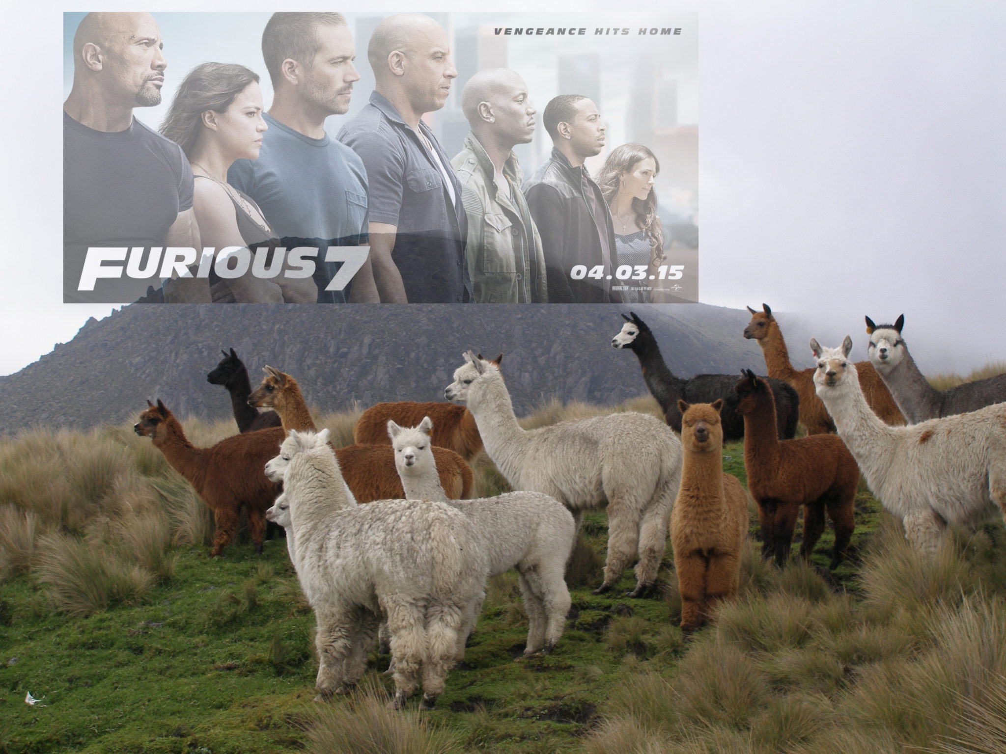 These alpacas are fast AND furious.