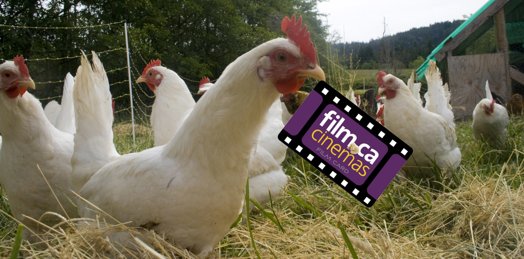 Signing up for a Film Card? Get a free chicken with 200 points!